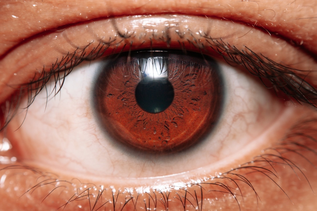Picture of a brown eye